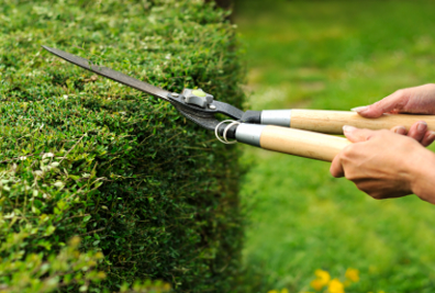 Els millors servei de jardineria