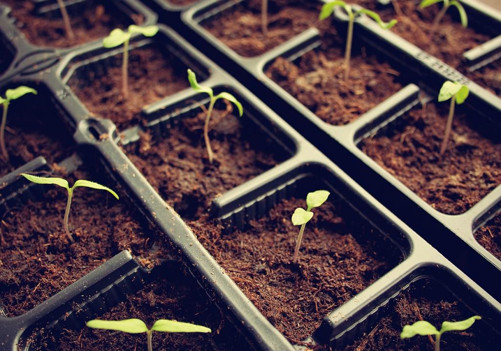 Venta de plantes i plantacions