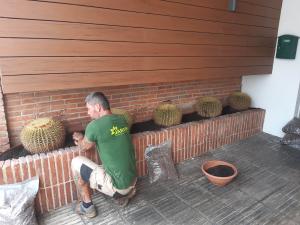 Jardinera cactus